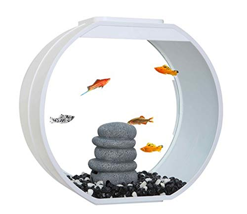 Fish R Fun, pecera decoración