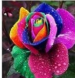 Kofun 200 Stück Bunte Regenbogen Rose Blumensamen Blütenblatt Pflanzen Hausgarten Yard Decor