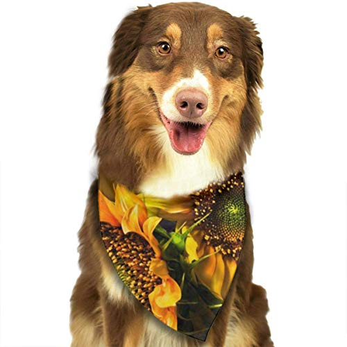 Hipiyoled Orange Sunflower Wallpaper Mix Colour Pet Bandana Multifunctional Headwear