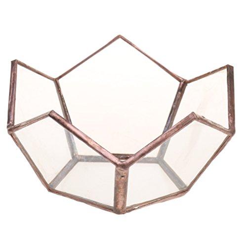 Sharplace Mini Glas Terrarium Lotus Glas Sukkulente Pflanzen Pflanzgefäß Deko