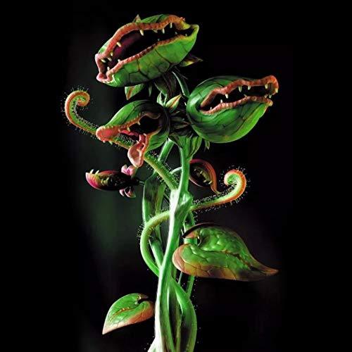kisshes giardino - 50/100 pezzo venere acchiappamosche seme semi di piante carnivore dionaea muscipula semi acchiappamosche semi hardy