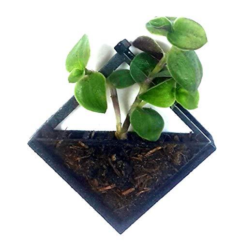Pin's zu Pflanzen, versorgt mit organischen Kompost und Samen (Kompost Versorgt)