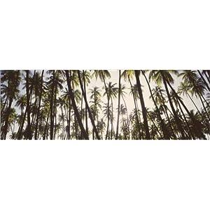 Posterlounge Acrylglasbild 90 x 30 cm: Kokosnusspalmen auf Hawaii von Panoramic Images – Wandbild, Acryl Glasbild, Druck…