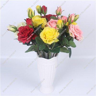 Exotique Miniature Bonsai Fleur Rose Rosas Graine Bricolage jardin et maison embellissant de purification d'air 110 Pcs/Sac 5