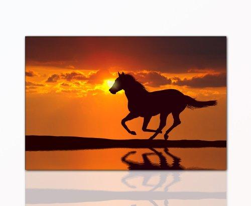 DEINEBILDER24 - Wandbild XXL Pferd 80 x 120 cm auf Leinwand und Keilrahmen. Beste Qualität,...