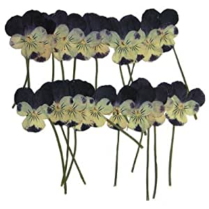 Pressed real dried flowers, Pansy 20pcs. card making & craft