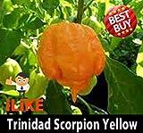 PLAT FIRM: Trinidad Scorpion Moruga Semi x 20 I Mondi Seconda Chilli Hottest