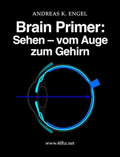 Brain Primer: Sehen - vom Auge zum Gehirn