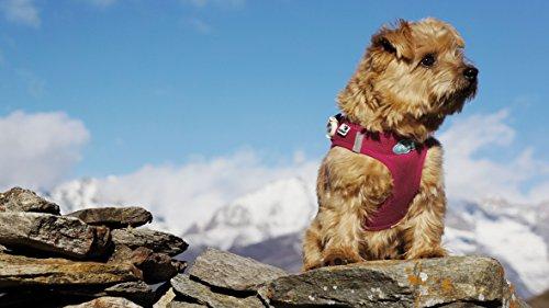 CURLI Brustgeschirr Plush Vest AIR-MESH camouflage für Hunde XL (53 – 58cm) - 4