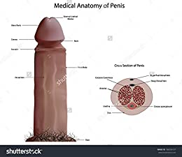 How Can I Get A Larger Penis