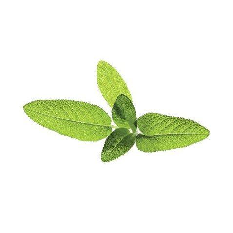 capsule salvia click and grow - confezione da 3 pezzi