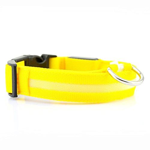 Sicherheit Hunde Leuchthalsband LED Hundehalsband mit Aufladbar USB-Kabel Verstellbar Hund Halsband für kleine Katzen aller Größen Hunde (Sicherheit Hund Halsband)