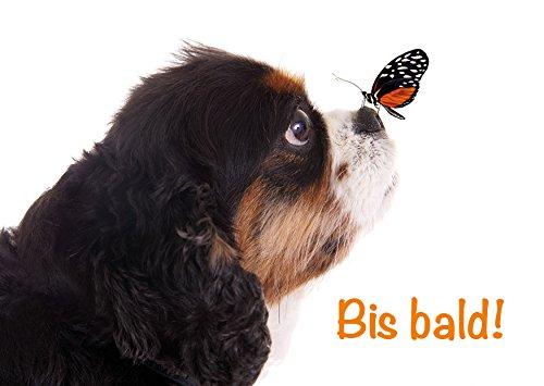 'Tarjeta, Postal, tarjeta felicitación perro mariposa: