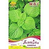PLAT FIRM-SEEDS Grüne Perilla-Samen * 1 Paket 30 Samen * Perilla Crispa Grün * P. Frutescens * Shiso * Green Shiso * Beefsteak Pflanze