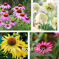 Nuova casa jardin plants 100pcs semi phlox officinale flower garden decoration mini bulbi da fiore perenne seme