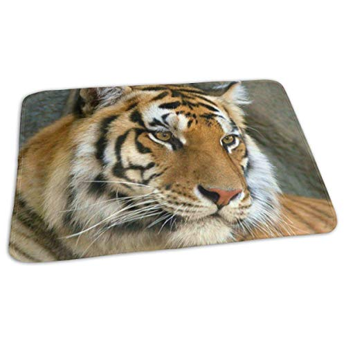 Kotdeqay Baby Changing Pad Liners Funny Tiger Daily Use Diaper Changing Pad Mats Portable Pad 25.5x31.5 Inches