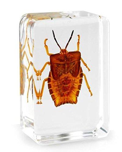 Real Lychee Bug...
