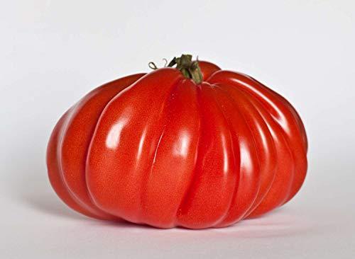 Asklepios-seeds© - 10.000 graines de tomate cœur de bœuf, Semences reproductibles, Solanum lycopersicum
