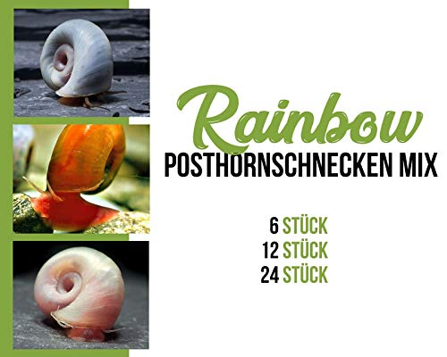 Garnelen Posthornschnecken Mix - Rainbow - Aquarium Schnecken - Algenvernichter Aquarium Algenbekämpfung, Menge:12 STK.