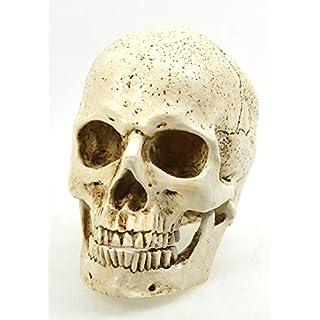 Ars-Bavaria Anatomie Schädel 2-TLG. mit Unterkiefer. Replik, Dekoration aus Kunststein