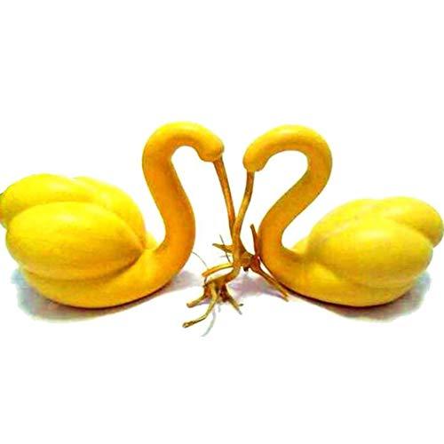 Vobome 10 teile/beutel Schwanenhals Kürbis Samen Lagenaria Siceraria Hausgarten Gemüse Gemüse