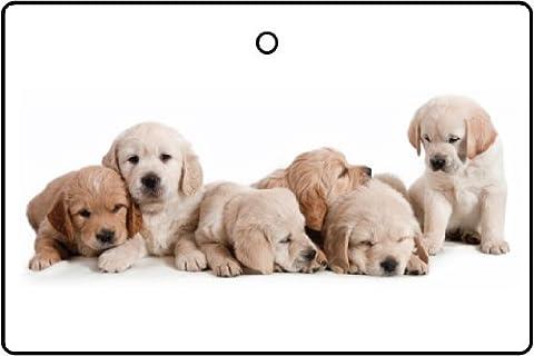 Désodorisant De Voiture PUPPY (Puppy Litter)