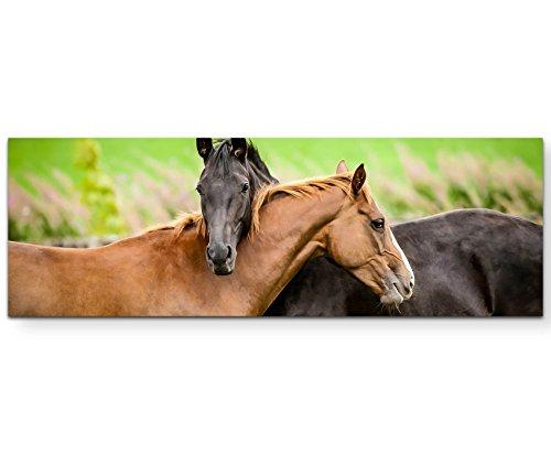 Paul Sinus Art Leinwandbilder | Bilder Leinwand 120x40cm Kuschelnde Pferde auf der Weide