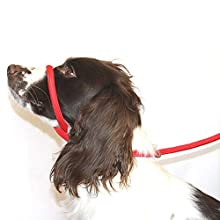 Dog & Field Figure 8 Anti Pull Lead / Halter / Head Collar (RED) - One Size Fits All - Super Soft Braided Nylon - Fitting Instructions Included- Comfortable, Kind, Supple, Secure and Proven to Make Your Walks More Enjoyable - No More Pulling!