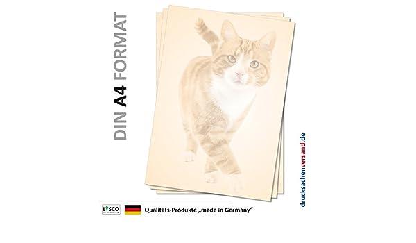 Tier-5077 DIN A4 100 Blatt Katze Kater Stubentiger Motivpapier Briefpapier