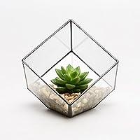 Pirámide de moderno de cristal mesa Succulent Plant Caja de terrario, Air & Cactus Soporte Funda, 100*100*100