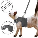 Thursday April Katzengeschirr Ausbruchsicher Geschirr Katzengarnitur Welpengeschirr Soft Ausbruchsicher Einstellbarer mit Leine für Kitten Hunde Chihuahua