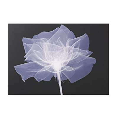 Graham & Brown X-Ray Rose Floral Black/White Canvas Wall Art Was £25 Now £5 - cheap UK light shop.