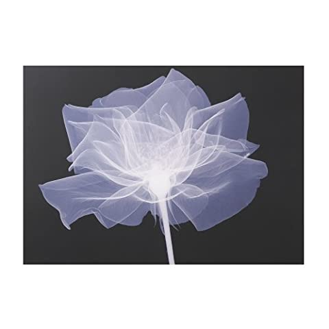 Graham and Brown 42252 X-Ray Rose Canvas