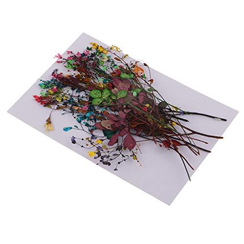 Descripción: - Muy bonita flor seca real, formas y colores de flores bien conservados. - Multifuncional, puede ser utilizado para muchos proyectos de artesanía. - Perfecto para la fabricación de velas, joyas, colgantes y dijes, mu...