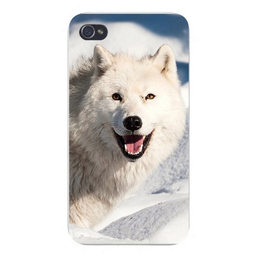 Apple Iphone Custom Case 4 4s Snap on - White Wolf Dog Laying Down in Snow