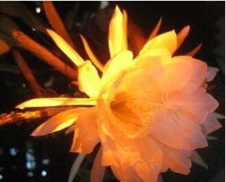 Hot Sale! Graines Promotion folle Rainbow Rose bricolage jardin Colorful Rose Plante Fleur, un paquet de 50 graines, # YLAVWV
