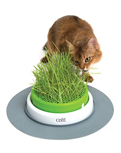 Cat it Senses 2.0 Jardin d'herbe pour Chat