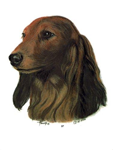 pet-lovers-gifts Aufkleber/Sticker/Autoaufkleber - Hunde Dackel/Teckel [r037] -