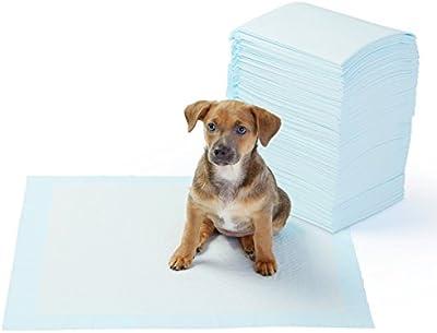 AmazonBasics - Toallitas de entrenamiento para mascotas (tamaño regular)