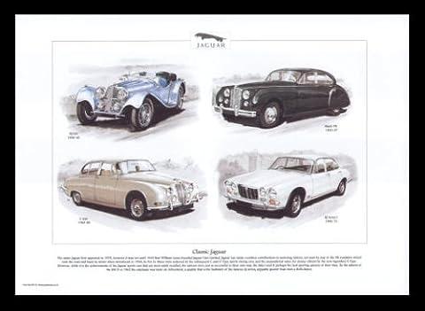 Jaguar Classic Cars - SS100, Mk7, S-type, XJ Series 1 - Art Print