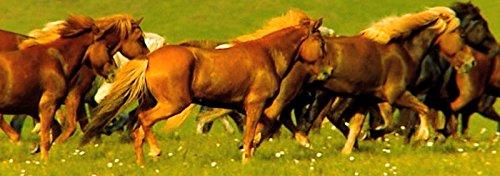 """Lentikular-Lesezeichen mit Wackelbild (Nr. 10169) - Wechselbild Pferd: \""""PFERDE-HERDE IM GALOPP\"""""""