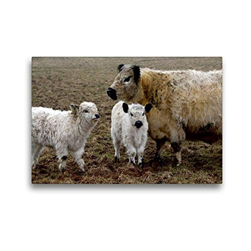 Calvendo Premium Textil-Leinwand 45 cm x 30 cm quer, Galloway-Familie   Wandbild, Bild auf Keilrahmen, Fertigbild auf echter Leinwand, Leinwanddruck Tiere Tiere -