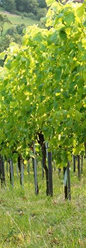 insidehome/Infrarotheizung mit Bild/Bildheizung SLIM/Stahlblech rahmenlos/extra schlank/mit hochwertigem Druck und Schutzlack / 350 Watt, 100x35x1,5 cm/für 5-7 m² / Motiv: Weingarten hoch