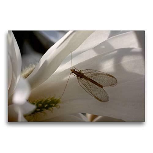 CALVENDO Tela in Tessuto di Alta qualità, 75 cm x 50 cm Orizzontale, Motivo Floreale con Magnolia Stellata, Immagine su Telaio, pronta da Appendere, Stampa su Tela Tiere Animali