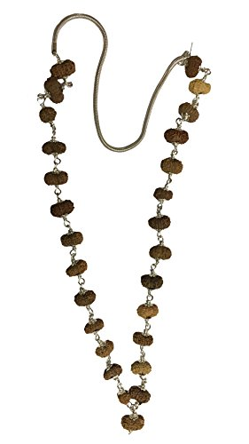 13 Mukhi Java Rudraksha Mala 27 Perles indonésien 12 Mm-14 mm en argent pur Lab Certifié