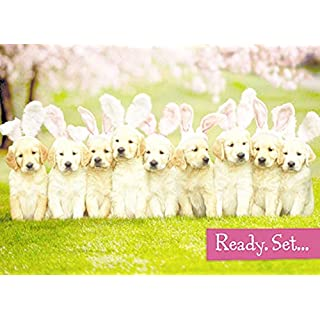 Avanti Cute Puppies Happy Easter Photo Greeting Card Funny Range Cards