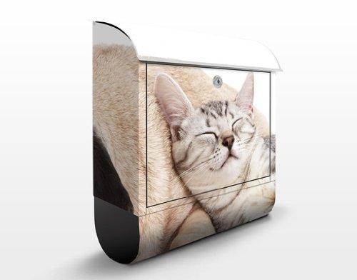 Design Briefkasten Beste Freunde | Hunde Katzen Tiere Mops Haustiere, Postkasten mit Zeitungsrolle, Wandbriefkasten, Mailbox, Letterbox, Briefkastenanlage, Dekorfolie