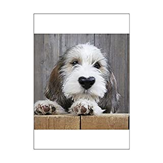 Media Storehouse A1 Poster of Petit Basset Griffon Vendeen puppy dog with heart shaped nose (13437835)
