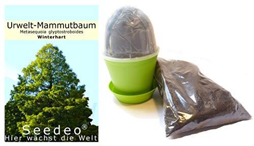 Seedeo® Anzuchtset Urwelt-Mammutbaum (Metasequoia glyptostroboides) 200 Samen