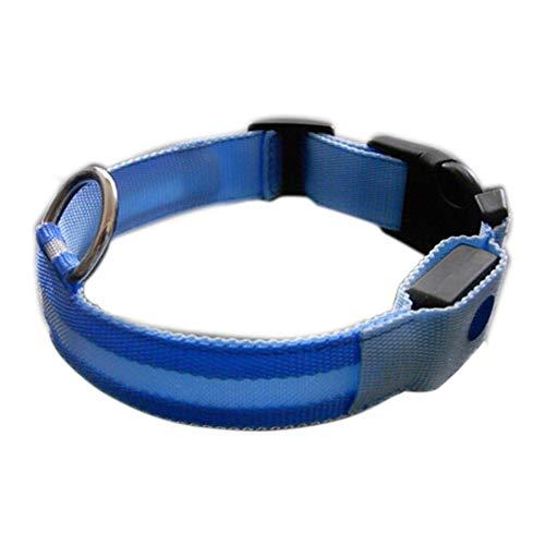 Newin Star LED-Halsband für Hunde, blinkend, mit Schnalle, für Welpen, beleuchtet, mit verstellbarem Schnalle (L, blau)